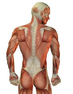 thai massage løsning sport i 2 eren